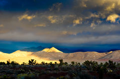 Desert Scene in Fall. Colors and overcast sky Royalty Free Stock Images