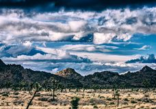 Desert Scene in Joshua Tree. Joshua Trees and other plant life growing strong in the desert under some clouds Stock Images