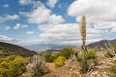 Desert Scenery in Anza-Borrego Desert State Park Stock Photography