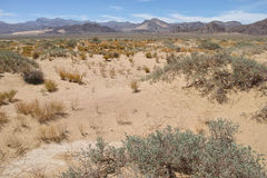 Desert scenery Stock Photography