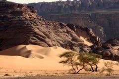 Desert scenes13 Stock Photo
