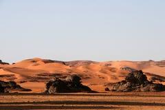 Desert scenes26 Royalty Free Stock Image