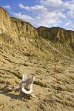 Desert Scenic. Part of cow skull in the desert Royalty Free Stock Image