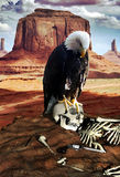 Desert secrets. Desert of Utah, Monument Valley. Close to us, on a rock, the skeleton of a man,  a hat and a rusty gun.rnA white eagle is settled on the skull Royalty Free Stock Image