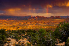 Desert Serenade Stock Image