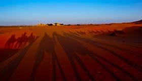 Desert Shadows. Shadows of camels during an excursion through the desert Stock Photo