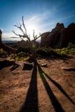 Desert shadows. Royalty Free Stock Images