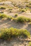 Desert shrub bush and sand. Landscape nature photo of desert shrub bush and sand in the morning light Stock Image