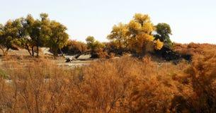 Desert shrub Stock Photo