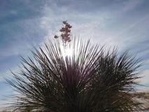 Desert shrub. Sunlight coming through shrub at White Sands National Park Royalty Free Stock Image