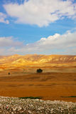 Desert Sinai in the morning Royalty Free Stock Photography