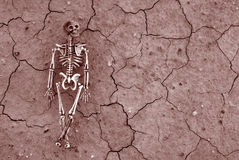 Desert Skeleton background Stock Images