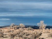 The desert sky. Cottonwoods and Sagebrush under a threatening desert sky Stock Photos