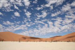 Desert sky. A row of trees in a desert in front of a sand mountain and blue sky Royalty Free Stock Photos