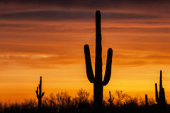 Desert Sky Royalty Free Stock Images