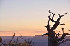 Desert Skyline. Desert brush silhouetted at sunset in Utah Stock Image
