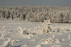 Desert in snow. Forest in snow, good for vacations, good for the sporty weekend Royalty Free Stock Images