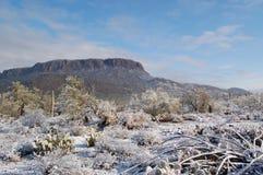 Desert snow Stock Photography
