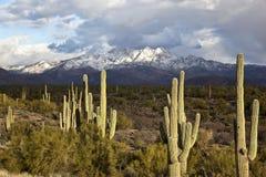 Desert Snow Royalty Free Stock Image