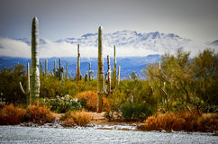 Desert Snow Royalty Free Stock Images