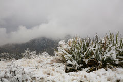 Desert Snowstorm. Uncommon snowstorm near Four Peaks Mountain not far from Phoenix Arizona Royalty Free Stock Photos