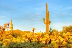 Desert. Sonoran Desert catching day's last rays stock images