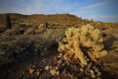 Desert Southwest Landscape and Nature Stock Photos