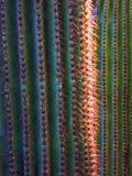 Desert Southwest Saguaro Cacti. Detailed closeup of spines on Saguaro cactus in desert southwest Royalty Free Stock Photo