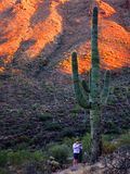 Desert Southwest Saguaro Cacti with Girl Stock Photos