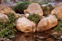 Desert Spring. Large red rock boulders beside a natural spring pool with small ferns Royalty Free Stock Photos