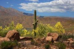 Desert Spring Stock Image