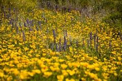 Desert Spring Wildflowers stock image