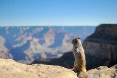 Desert squirrel on rock
