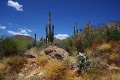 Desert Ssring Stock Images