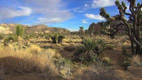 Desert Stillness Scene Joshua Tree Park California stock video