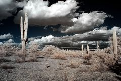 Desert Storm Stock Photo