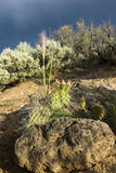 Desert in a storm. Cactus is desert before the storm royalty free stock photography