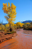 Desert Stream in Fall Royalty Free Stock Image