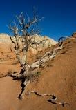 Desert struggle Stock Photo