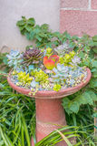 Desert succulent planter Stock Photo
