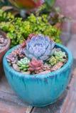 Desert succulent planter Royalty Free Stock Photo