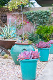 Desert succulent planter Royalty Free Stock Images