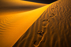 Desert. Such a great experience to capture desert from liwa abudhabi with leaving footprints behind Royalty Free Stock Photos