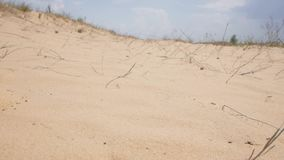 Desert in sunny day. POV of desert landscape close up to the groundn stock video