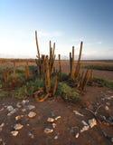 Desert sunrise Stock Image