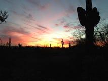 Desert Sunrise. Cactus silhouette sunset Royalty Free Stock Image