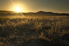 Desert Sunrise, California Royalty Free Stock Photo