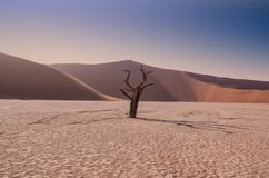 Desert Sunrise. Early morning in the Namibian desert at Dead Vlei royalty free stock image