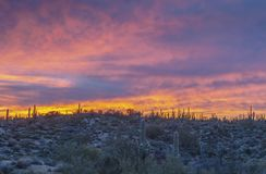 Stunning Desert sunrise in North Scottsdale, Arizona royalty free stock photo