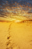 Desert at sunset. View of desert at sunset Royalty Free Stock Photos
